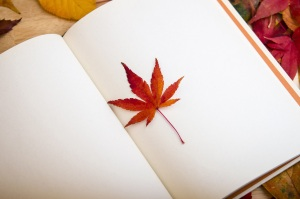 maple-leaf-638022